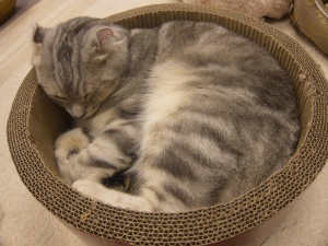 Basket cat.