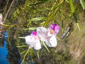 Orchid that I almost died trying to take a picture of
